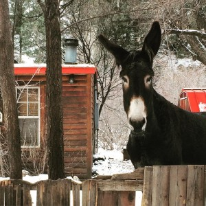Donkey friend we met while lost in the Colorado wildernesshellip