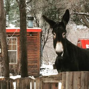 Donkey friend we met while lost in the Colorado wildernesshellip