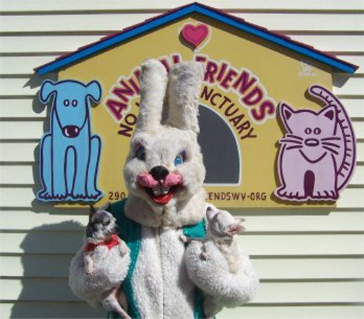 90353536244079194 Kt3yPPEL f The Most Terrifying Easter Bunny Photos Youll Ever See pop culture featured  Terrifying Easter Bunnies Scary Easter Bunnies Pinterest featured Easter