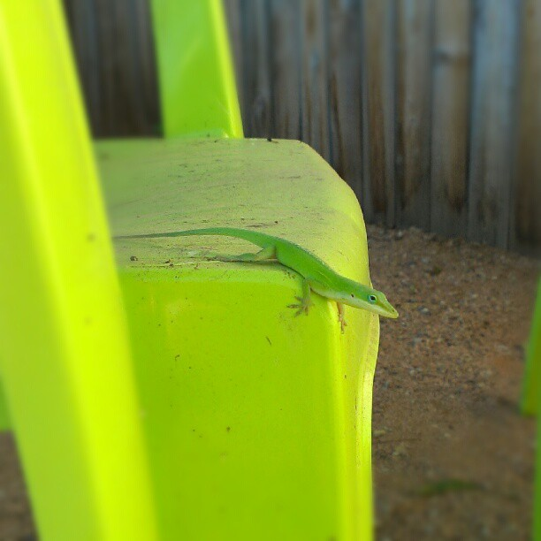 gecko How to Find Balance in Life social media hipstercrite featured austin  remembering to stop and smell the roses remembering to relax not making work your life Internet short attention span Internet making me lose balance Internet losing focus Internet driving me insane gecko finding work and life balance finding balance featured enjoying life chilling out being a kid again Austin gecko anxiety