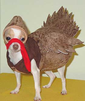& 13 Pictures of Dogs and Cats Dressed Up for Thanksgiving