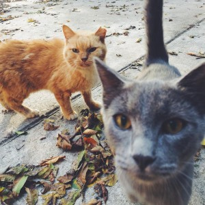Good morning from the feral cats in my alley FatFacehellip