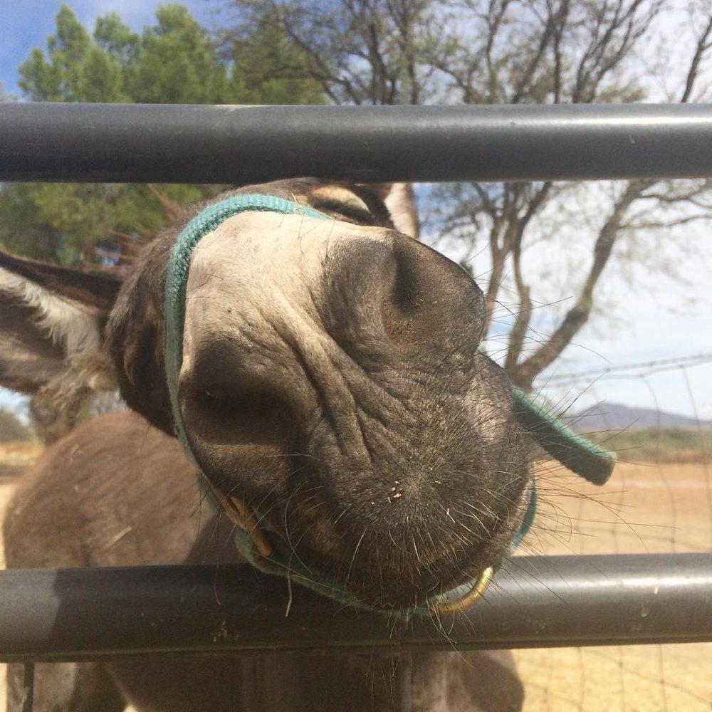 #Mule friend. #desertlife #Arizona