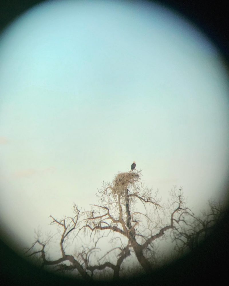 The baldeagle in our backyard as seen through binoculars Wehellip