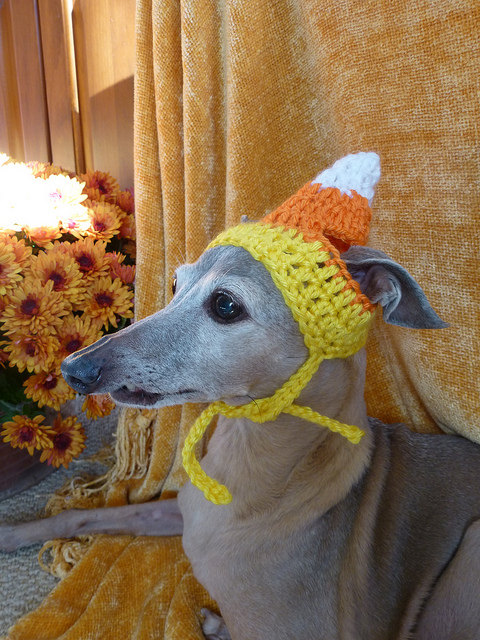 Favorite 13 Pictures of Dogs and Cats Dressed Up for Thanksgiving JQ21