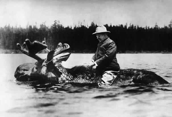 teddy roosevelt on a moose