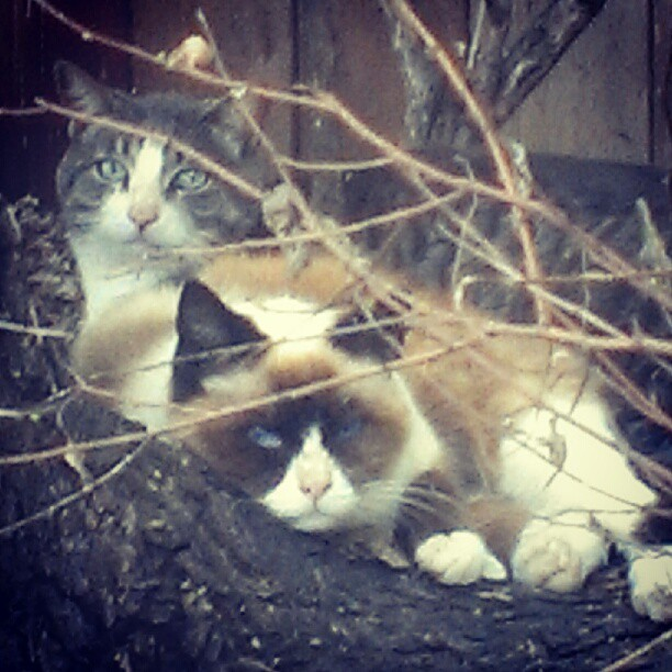 feral grumpy cat
