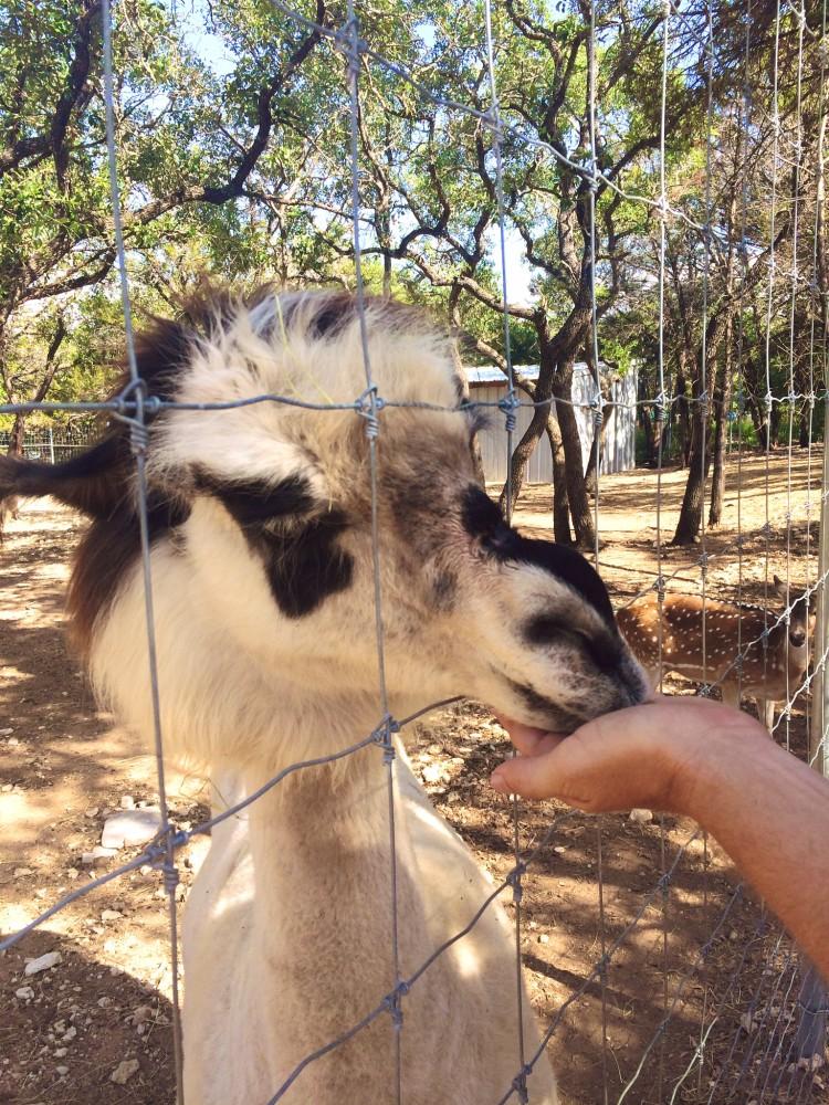 Austin Zoo and Sanctuary