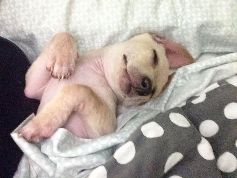 austin rescue dog